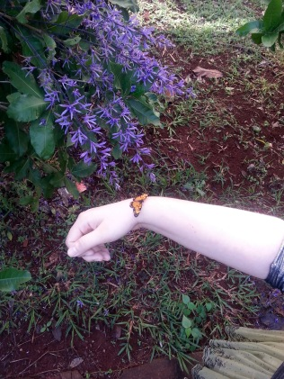 ​A pretty butterfly visited me on my walk across campus.