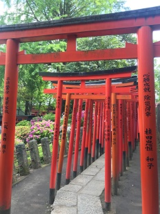 Torii gates at Nezu shrine
